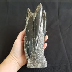 Orthoceras Fossil Tower - 18cm