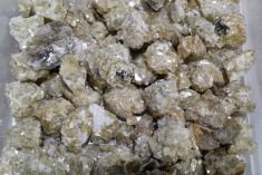 Rough - Mica 250gms