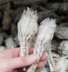 White Sage Smudge Stick Mini Wholesale