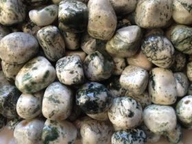 Tree Agate Tumbled Stones 250gms